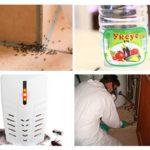 Böcekleri öldürmenin yolları