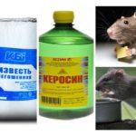 Sıçan ve farelerden elde edilen fonlar
