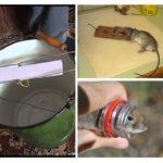 Evde sıçanların yok edilmesi
