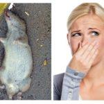 Ölü fare