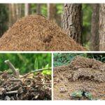 Karıncalar konut
