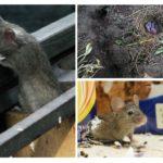 Ev faresi hayatı