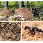 Karınca yuvası hayatı