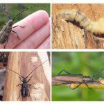 Böceklerin özellikleri
