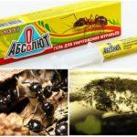 Karıncalar Absolut