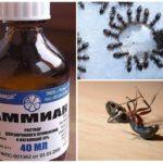 Karıncalardan Amonyak