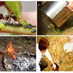 Karıncalar mücadele