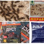 Karınca Kimyasalları
