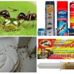 Karıncalarla savaşmak anlamına gelir