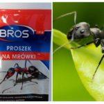 Karıncaları Demektir