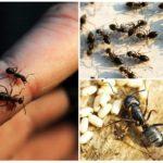 Karınca habitatı