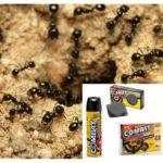 Karınca karınca