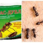 Karıncalardan Fas-Çift anlamına gelir