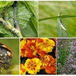 Biyolojik mücadele yöntemleri