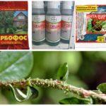 Yaprak bitlerinin yok edilmesi için kimyasal yöntemler