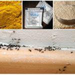 Karıncalar için halk ilaçları