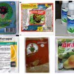 Yaprak bitleri için etkili ilaçlar