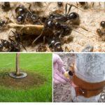 Ağaçlarda karınca tuzakları