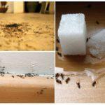 Apartmanda karıncalar