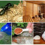 Banyoda karıncalar
