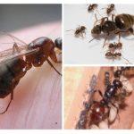 Kolonide karıncaların bileşimi