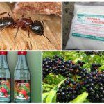 Bahçedeki karıncalar için halk ilaçları