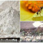 Uygulama Fas'tan böceklerin iki katı