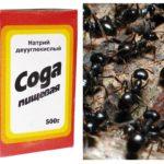 Soda Mücadele Karıncaları