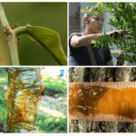 Ağaçlar için emprenye maddeleri