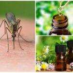 Sivrisineklerden uçucu yağlar