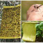 Yapışkan böcek tuzakları