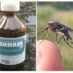 Sivrisineklerden ve midgeslerden amonyak