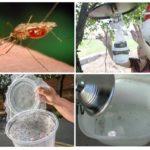 Ev yapımı sivrisinek tuzakları