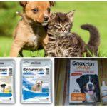 Köpeği sivrisineklerden korumak için hazırlıklar