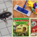 Evde böceklerin yok edilmesi