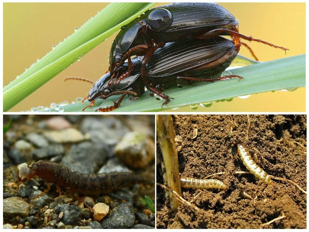 Böcek yetiştiriciliği