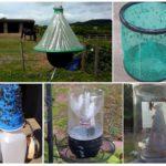 Ev yapımı böcek tuzakları
