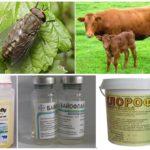 Hayvanları kan emici böceklerin ısırıklarından korumak