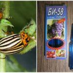 Colorado Patates böceği Bi 58 anlamına gelir