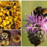Bal Bumblebees