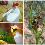 Colorado patates böceği karşı kimyasallar