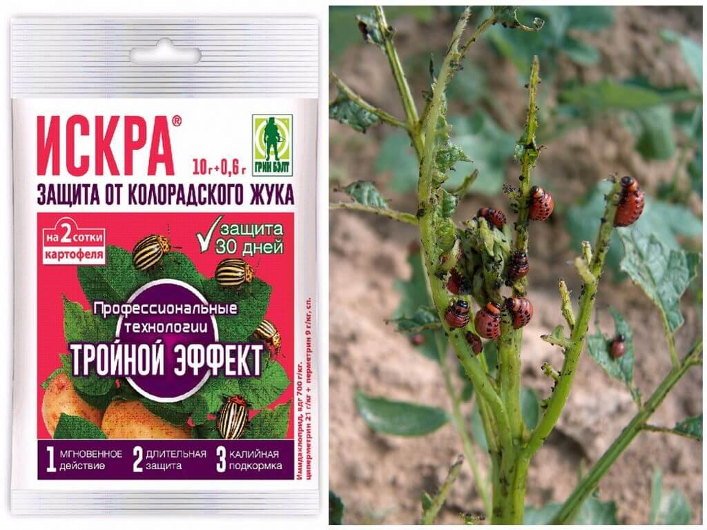 Colorado patates böceği kıvılcım üçlü etkisi