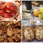 Colorado patates böceği infüzyonları ve decoctions