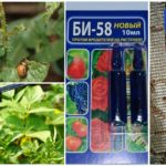 Colorado Patates böceği karşı Bi 58 anlamına gelir