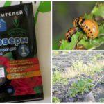 Colorado böceklerinden bitki çiftliğinin uygulanması