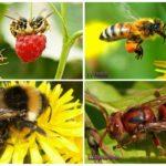 Bir yaban arısı, eşek arısı, yaban arısı, arı farkı
