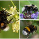 Renkli bumblebees