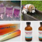 Köpek ısırığı etkilerinin tedavisi