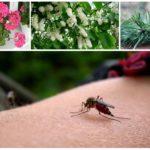 Halk sivrisineklerle savaşmak demektir