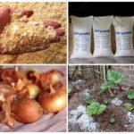 Colorado Patates Böceği ile Savaş Yolları